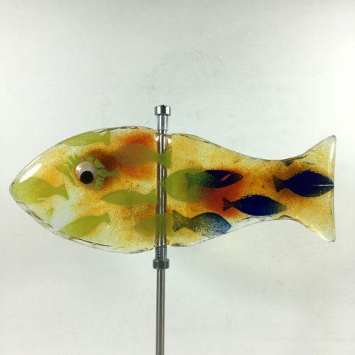 Glasfisch Hering Bild 1