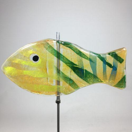 Glasfisch Sardine VIV Bild 1