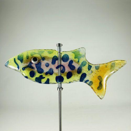 Glasfisch Hai Bild 1