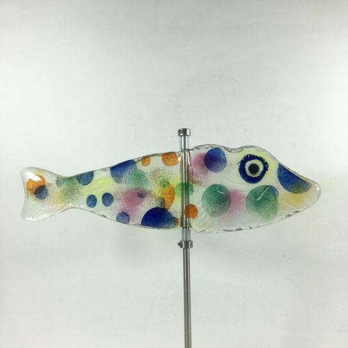 Glasfisch Knurrhahn Bild 1